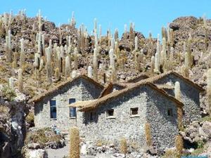 incahuasi oftewel het vis eiland op de zoutvlakte