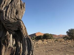 Namib Naukluft - bedding Tsauchabrivier