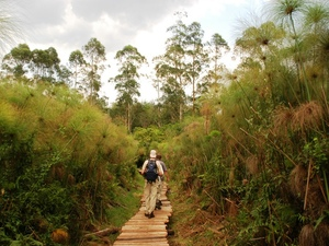 40 - Bigodi Swamp - wandeling