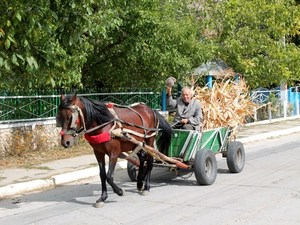 Paard en wagen Butuceni Casa Verde Moldavie