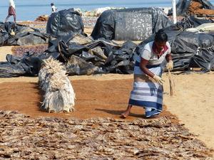 Negombo - vismarkt