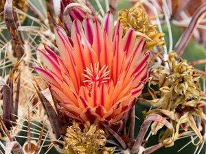 Cactus-park op Lanzarote
