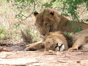 Rondreis Zuid-Afrika nationale parken, 18 dagen. Een onvergetelijke reis.