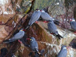 Rijk vogelleven op de eilanden