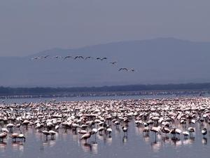 Lake Nakuru - Flamingo's