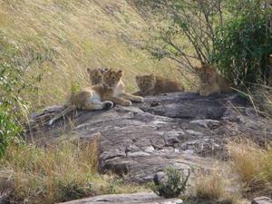 Masai Mara - Welpjes