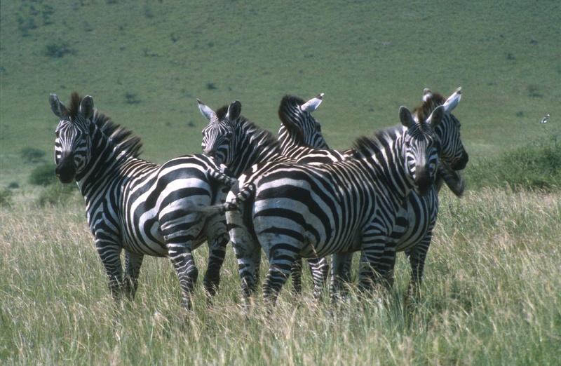 Omovallei - Nechisar national park