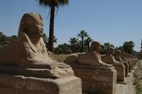Sphynxen Luxor Egypte Junior Djoser