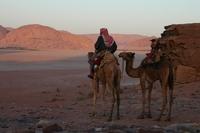 Dromedaris Woestijn Jordanie Junior Djoser