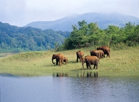 Periyar Zuid-India Olifanten