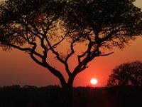 Zuid Afrika Krugerpark zonsondergang Djoser