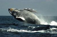 Bultrug walvis Kaikoura Nieuw-Zeeland Djoser