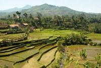 Bali Rijstterrassen Groepsreis