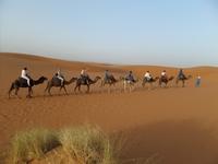 Kamelentocht Woestijn Groep Marokko Junior Djoser