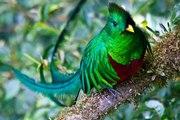 Quetzal Costa Rica Djoser