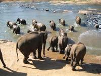 Sri Lanka olifant opvang
