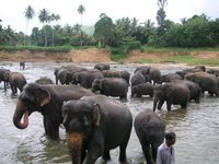 Olifanten opvang Sri Lanka djoser