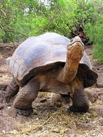 Ecuador Galapagos eilanden Djoser