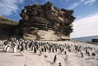 Antarctica Pinguins Djoser