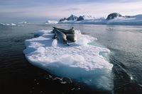 Antarctica Robben Djoser