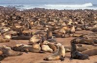 Namibie Geraamte kust Cape Cross pelsrobben Djoser