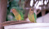 vogels bigi pan vogel reservaat Suriname Djoser