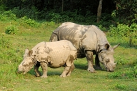 neushoorn chitwan national park nepal djoser