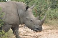 Marakele Zuid-Afrika