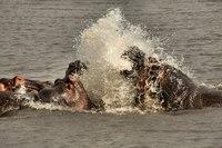 Kenia tanzania nijlpaarden
