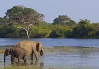 Olifanten Spotten Sri Lanka Djoser