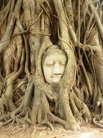 Ayutthaya Wat Phra MahathatThailand Family Djoser