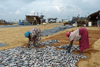 vismarkt Negombo Sri Lanka Djoser