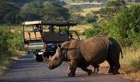 Zuid-afrika safari Djoser