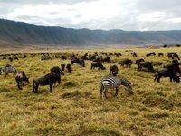 Ngorongoro krater Tanzania Djoser
