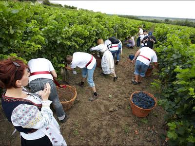 Wijnfestiviteiten in Moldavië