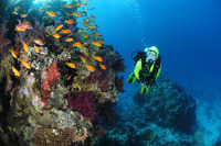 Rode Zee duiken