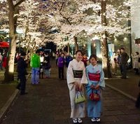 Kersenbloesem Kyoto Japan Djoser