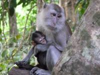 Thailand Maleisie Singapore Khao Sok Nationaal park Djoser Family