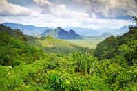 Khao Sok NP Jungle Djoser Family Thailand