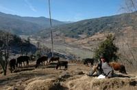 Buthan Bhumtangvallei Djoser