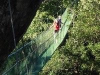 Hangbrug Costa Rica Natuur Wandel en Fiets Djoser