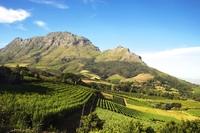 Wijnvelden Zuid-Afrika Djoser