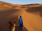 Marokko woestijn berber kameel
