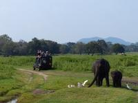 Sri Lanka Minneriya jeep