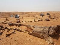 Versteend woud El Kurru Noord-Soedan