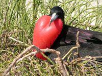Vogel Galapagos