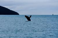 alaska walvis