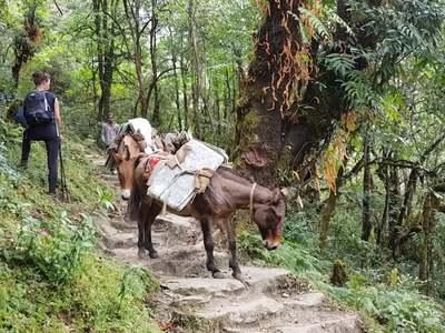 Wandel- en Fietsreis Nepal