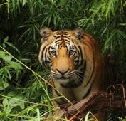 Rondreis India Ranthambore Djoser tijger