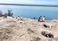 Pinguins Valdes Argentinie